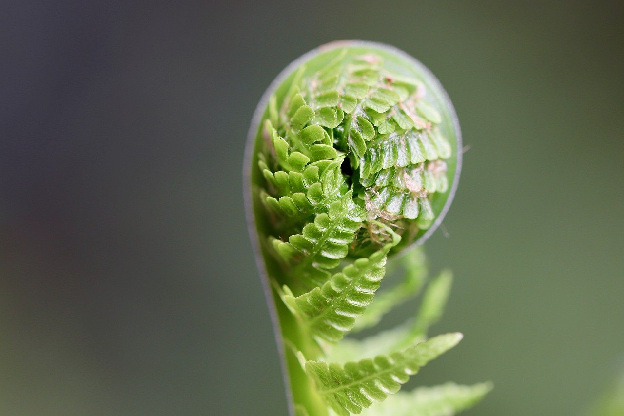 fern, sprout, plant